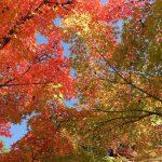 八瀬 瑠璃光院〜秋の特別拝観〜