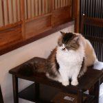 京都西陣にある猫カフェ