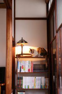 本棚でくつろぐ猫